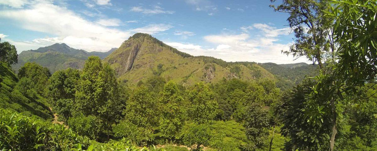 Sri lanka plantaz TravelNative