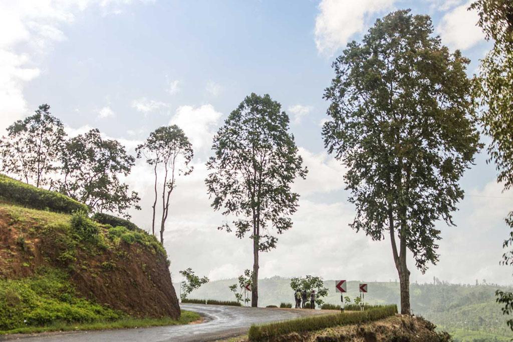 gallery srilanka_0013_DSC_3388